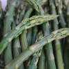 LOCAL Asparagus - NOW Available