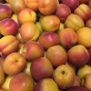 Apricot season has started - 23/05/16