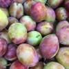 English Victoria Plums have arrived! 17/08/16