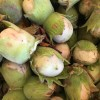 Cobnuts - Now Available 23/08/16