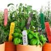 NEW LINE!!! Micro Herbs