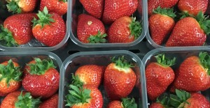 LOCAL Strawberries *Available from 19th March* 15/03/18