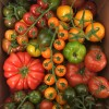 Nutbourne Tomatoes - *NOW Available* 08/04/17