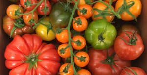 Nutbourne Tomatoes *NOW AVAILABLE*  16/03/18