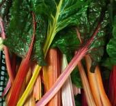 Local Rainbow Chard & Fancy Lettuce 14/07/16