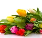 Fantastic Flowers!